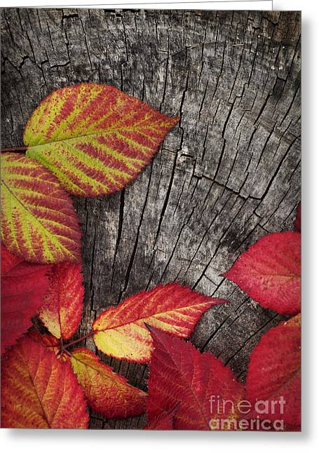 Mythja Greeting Cards - Autumn red leaves Greeting Card by Mythja  Photography