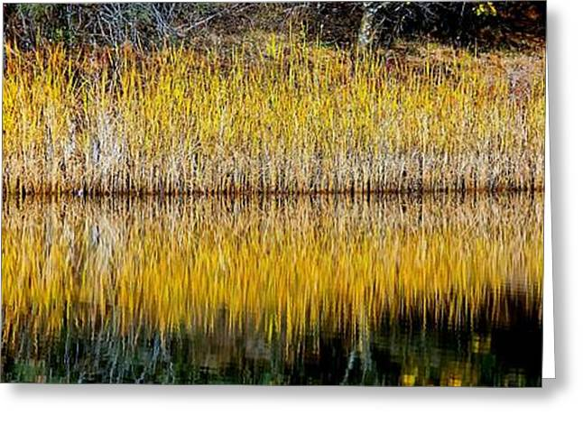 Purchase Greeting Cards - Autumn Reed Reflection Greeting Card by Patrick Witz