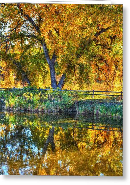 Trees Reflecting In Water Greeting Cards - Autumn Reflecting Greeting Card by Diane Alexander