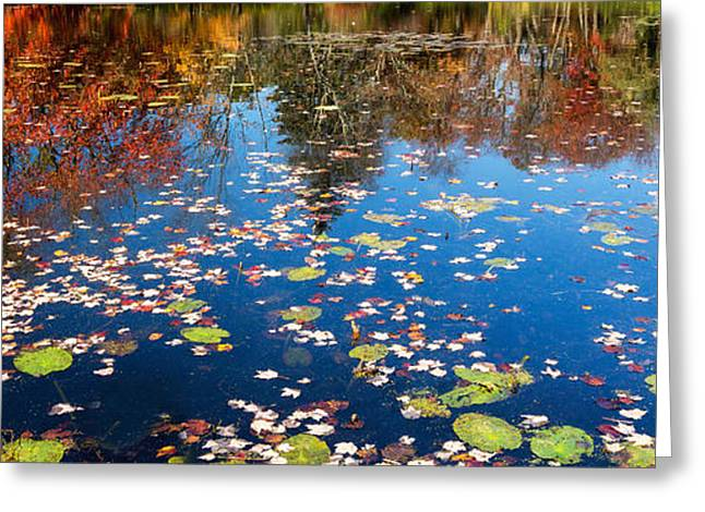 Lilly Pad Greeting Cards - Autumn Reflections Greeting Card by Bill  Wakeley