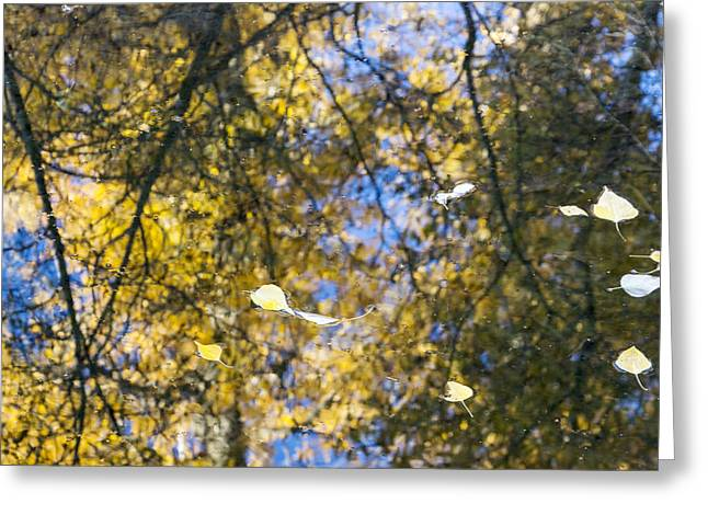 Autumn Reflections Greeting Card by Dana Moyer