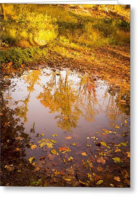 Mud Season Greeting Cards - Autumn Reflections Greeting Card by Erin Cadigan