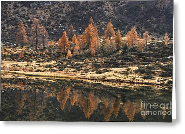 Reflection Of Trees In Lake Greeting Cards - Autumn reflections Greeting Card by Simona Ghidini