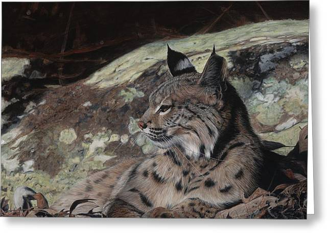 Recently Sold -  - Bobcats Greeting Cards - Autumn Rest Greeting Card by Pat Gilmore