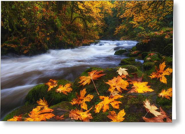 Autumn Prints Photographs Greeting Cards - Autumn Returns Greeting Card by Darren  White