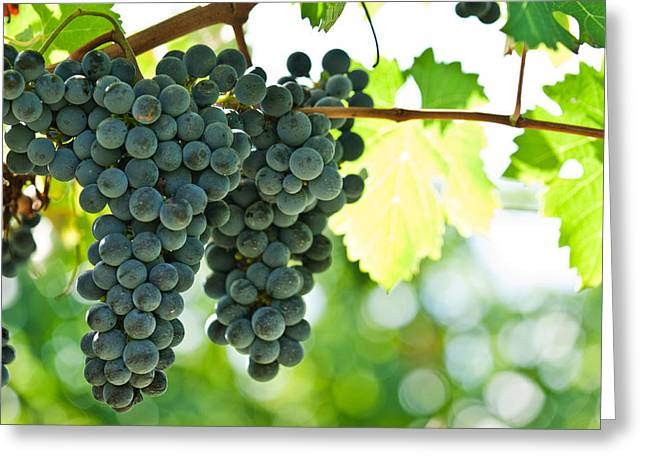 Autumn ripe red wine grapes right before harvest Greeting Card by Ulrich Schade