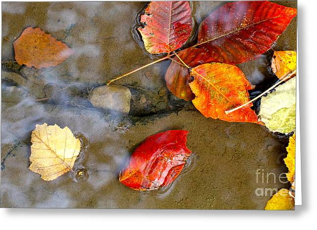 Natural Dam Arkansas Greeting Cards - Autumn Ripples Greeting Card by Robin Erisman