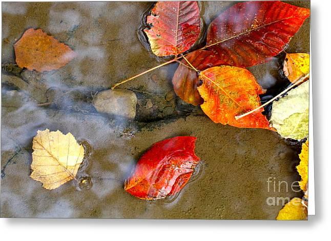 Natural Dam Arkansas Greeting Cards - Autumn Ripples Greeting Card by Robin Erisman
