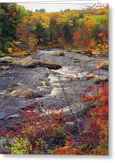 Nature Scene Greeting Cards - Autumn River Greeting Card by Joann Vitali