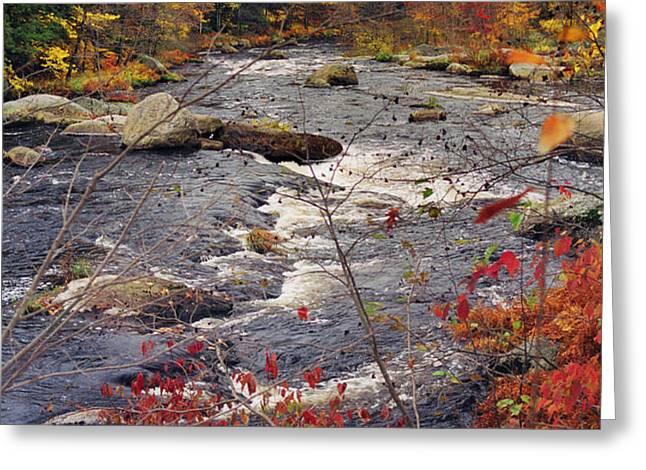 Autumn River Greeting Card by Joann Vitali