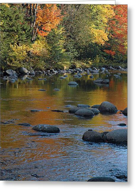 Reflections Of Trees In River Greeting Cards - Autumn River Reflections Greeting Card by Bruce Gourley