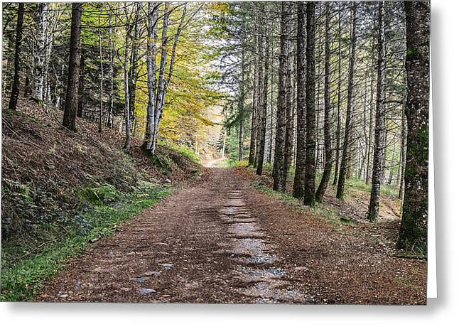 Green Day Greeting Cards - Autumn road in the forest Greeting Card by Tilyo Rusev
