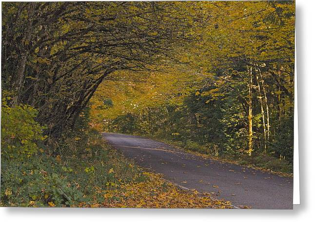 Autumn Road Greeting Card by Tim Rice