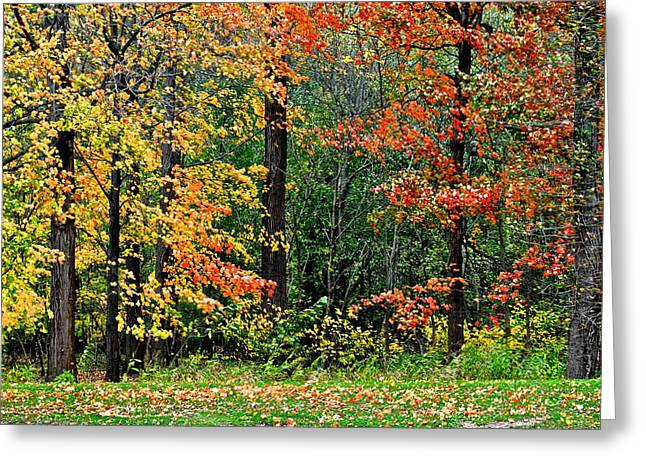 Walnut Tree Photograph Greeting Cards - Autumn Greeting Card by Frozen in Time Fine Art Photography