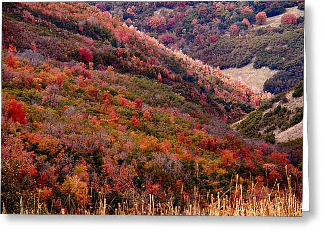 Autumn Greeting Card by Rona Black