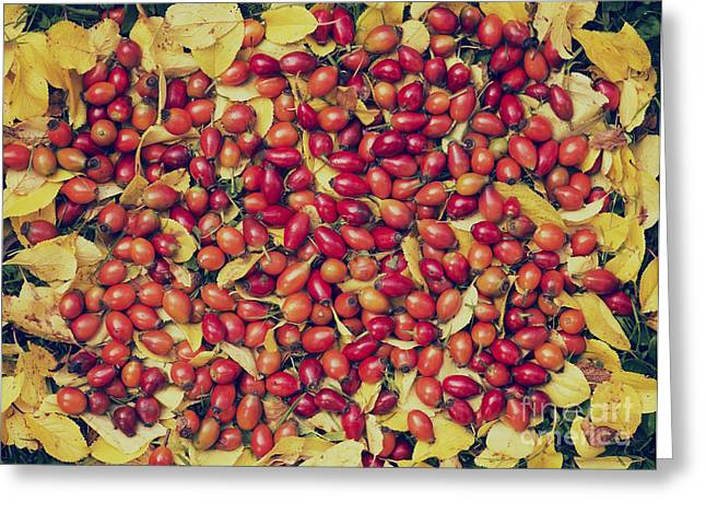 Foraging Greeting Cards - Autumn Rosehips  Greeting Card by Tim Gainey