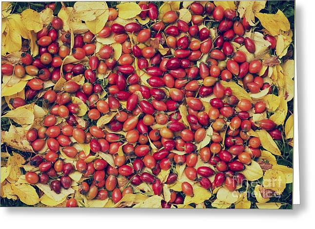 Harvest Art Greeting Cards - Autumn Rosehips  Greeting Card by Tim Gainey