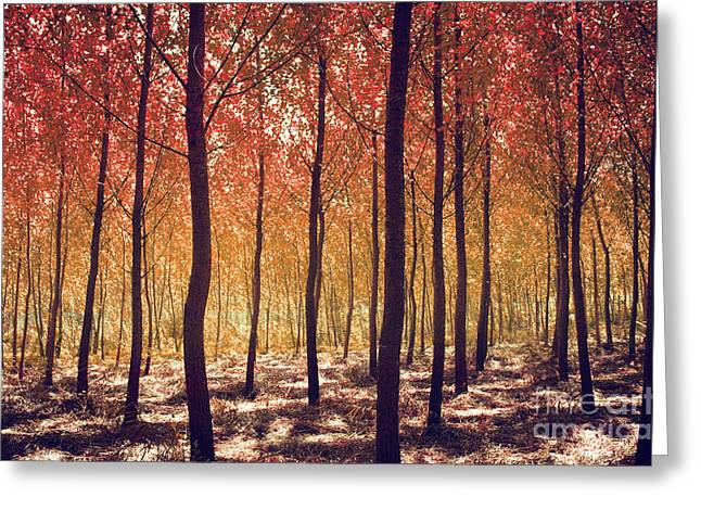 Beautiful Fall Sunset Greeting Cards - Autumn Scenic Greeting Card by Carlos Caetano