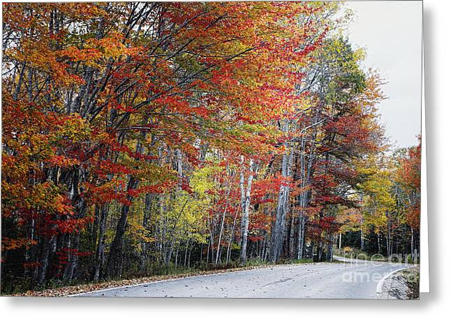 Scenic Drive Greeting Cards - Autumn Scenic Road in Acadia  Greeting Card by George Oze