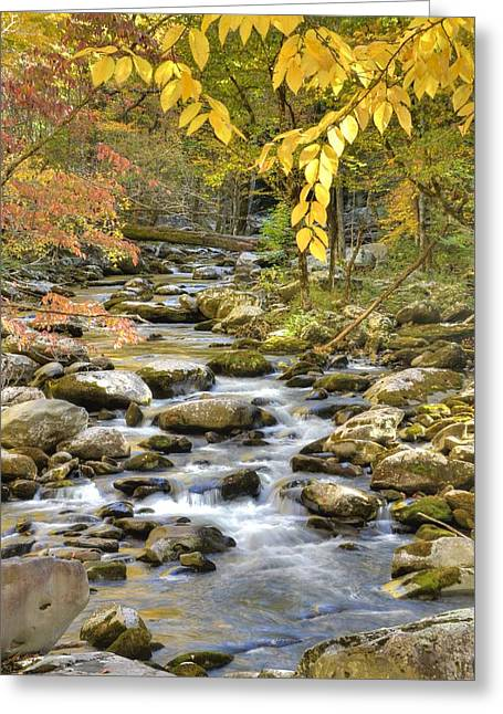 Babbling Greeting Cards - Autumn Serenity Greeting Card by Mary Anne Baker