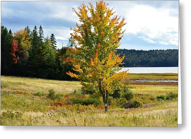 Town Of Franklin Greeting Cards - Autumn Shores of Maine Greeting Card by Lena Hatch
