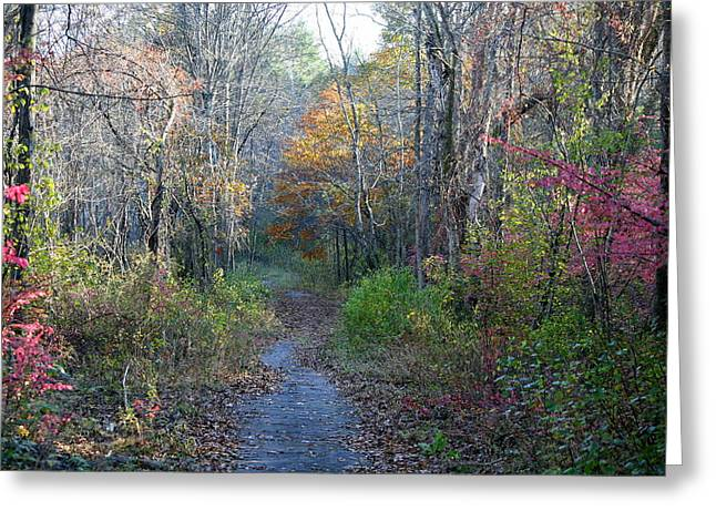 Neal Eslinger Photography Greeting Cards - Autumn Silence No.2 Greeting Card by Neal  Eslinger