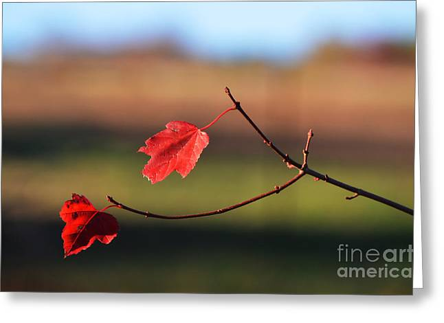 Red Leaves Digital Greeting Cards - Autumn Simplicity- Fall Landscape  Greeting Card by ArtyZen Studios - ArtyZen Home