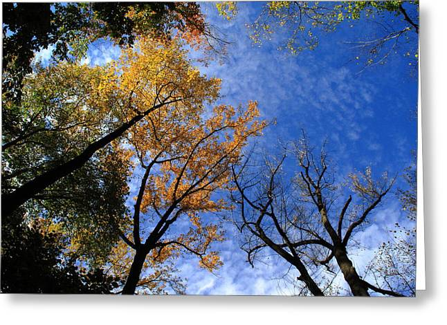 November Framed Prints Greeting Cards - Autumn Skyscape Greeting Card by Frank Romeo