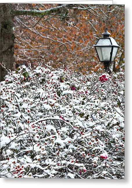 Beach Roses Greeting Cards - Autumn Snow Greeting Card by Michelle Wiarda