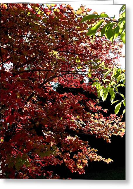 Autumn Snowball Bush Greeting Card by Will Borden