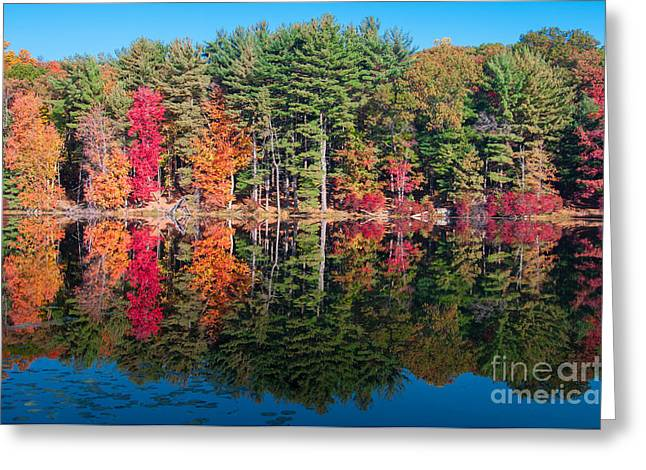 Turning Leaves Greeting Cards - Autumn Spectacular Greeting Card by Anthony Sacco