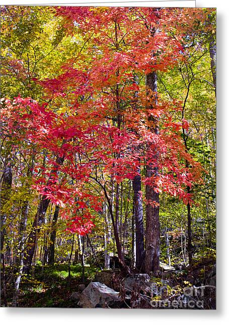 Colors Of Autumn Greeting Cards - Autumn Splender Greeting Card by Paul W Faust -  Impressions of Light