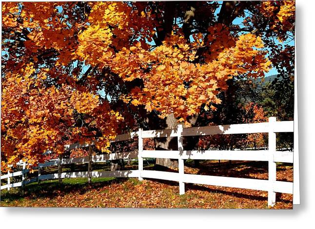 Autumn Splendor Greeting Cards - Autumn Splendor 10 Greeting Card by Will Borden