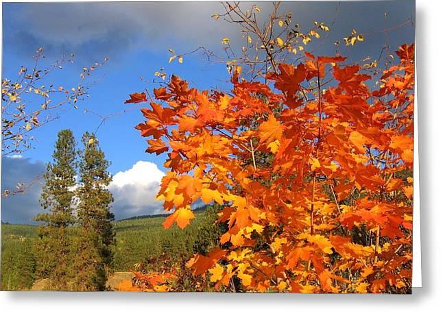 Autumn Splendor Greeting Cards - Autumn Splendor 13 Greeting Card by Will Borden