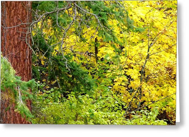 Autumn Splendor Greeting Cards - Autumn Splendor 14  Greeting Card by Will Borden