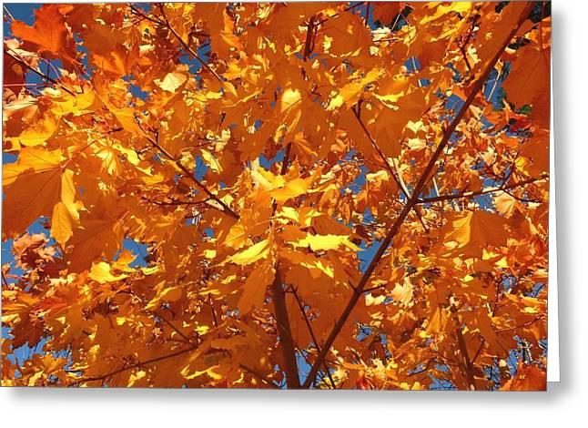 Autumn Splendor Greeting Cards - Autumn Splendor 15 Greeting Card by Will Borden