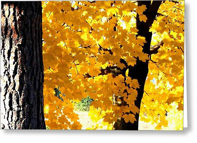 Autumn Splendor Greeting Cards - Autumn Splendor 2 Greeting Card by Will Borden