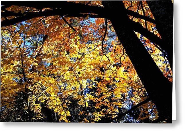 Autumn Splendor Greeting Cards - Autumn Splendor 3 Greeting Card by Will Borden