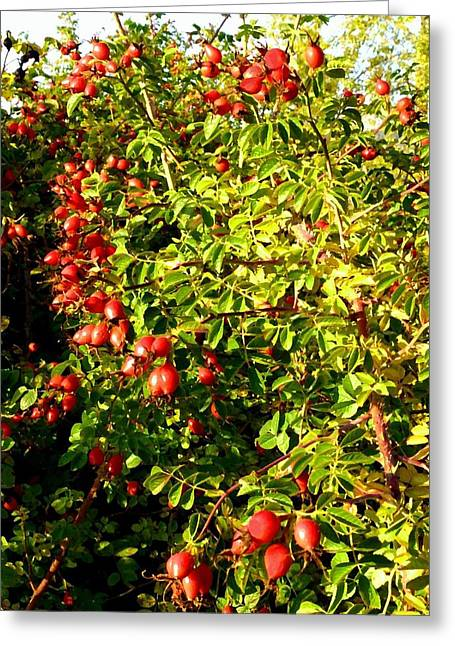 Autumn Splendor Greeting Cards - Autumn Splendor 5 Greeting Card by Will Borden