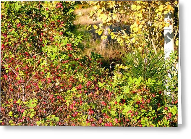 Autumn Splendor Greeting Cards - Autumn Splendor 7 Greeting Card by Will Borden