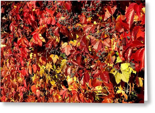 Autumn Splendor Greeting Cards - Autumn Splendor 8 Greeting Card by Will Borden