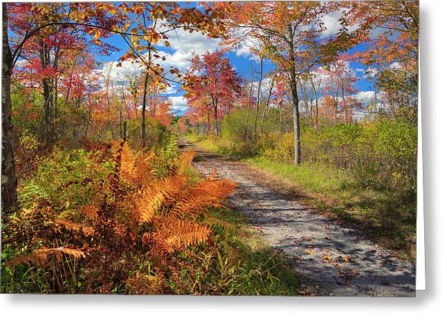 Old Country Roads Greeting Cards - Autumn Splendor Greeting Card by Bill  Wakeley