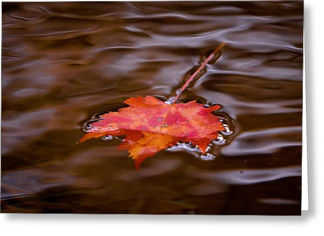 Go With The Flow Greeting Cards - Autumn Splendor Greeting Card by Darren Strubhar