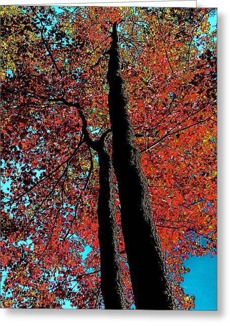 Surreal Landscape Greeting Cards - Autumn Splendor Greeting Card by David Patterson