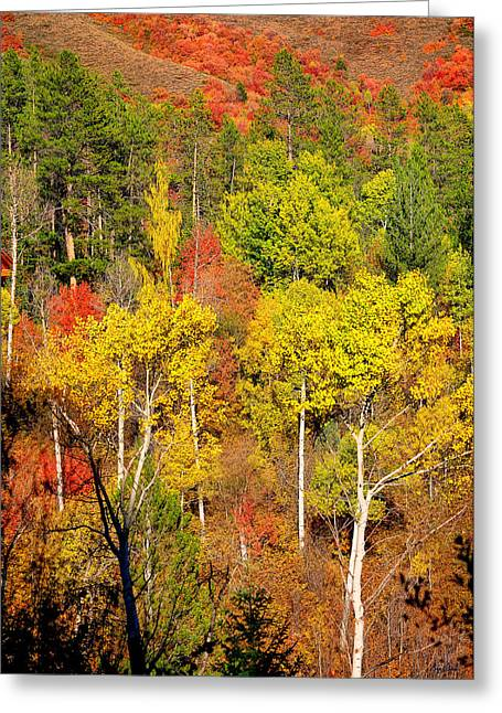 Greeting Cards Greeting Cards - Autumn Splendor Greeting Card by Greg Norrell
