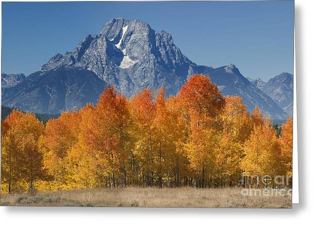 Out West Greeting Cards - Autumn Splendor In Grand Teton Greeting Card by Sandra Bronstein
