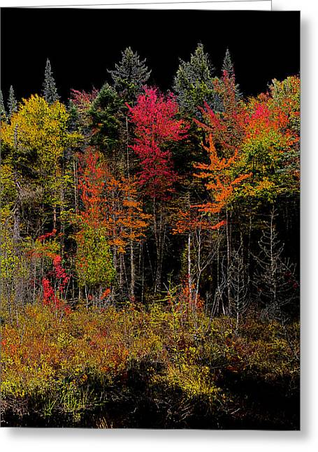 Autumn Splendor Greeting Cards - Autumn Splendor in the Adirondacks Greeting Card by David Patterson