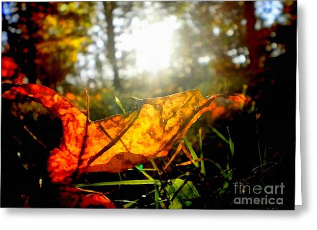 Eco System Greeting Cards - Autumn Splendor Greeting Card by Janine Riley