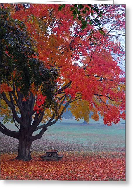 Colorful Greeting Cards - Autumn Splendor Greeting Card by Lisa  Phillips