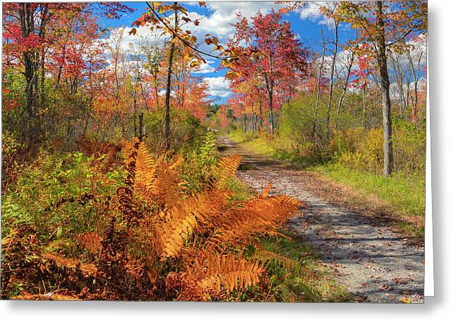 Old Country Roads Greeting Cards - Autumn Splendor Square Greeting Card by Bill  Wakeley